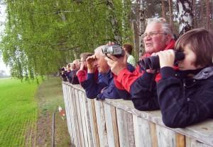 Vogelbeobachtungen von der Besucherplattform in Amalienhof (Saskia Buchendorf)