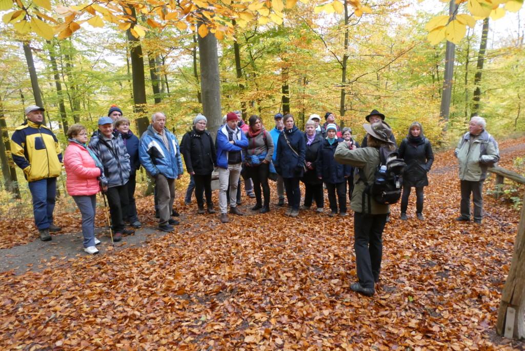 Mit den Partnern aus dem Nationalpark Sächsische Schweiz unterwegs in den Buchenwäldern des Kellerwalds - Fotos: Nationalpark Kellerwald-Edersee